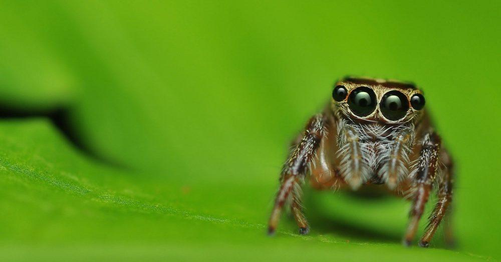 Паук с огромными глазами